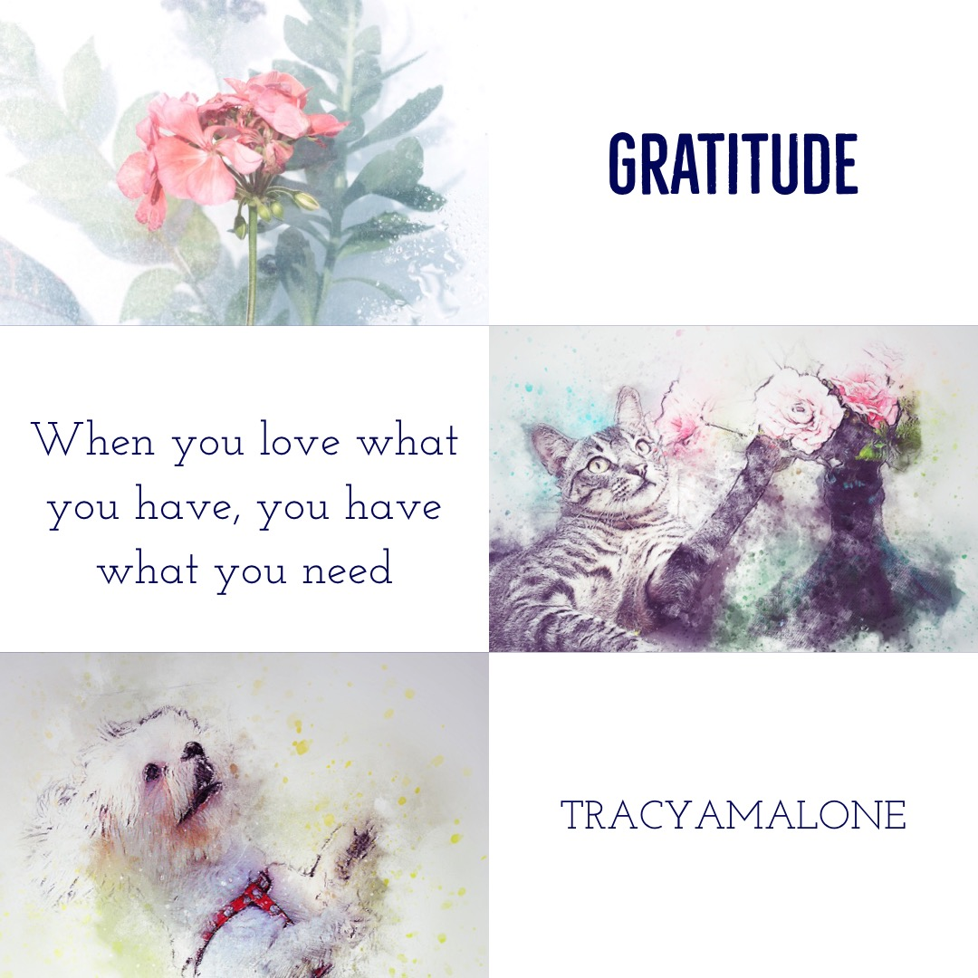 Gratitude Memes For The Holidays Narcissist Abuse Support